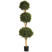 Boxwood Triple Ball Tree (6ft)