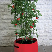 Tomato (Climbing) Patio Planter & Support