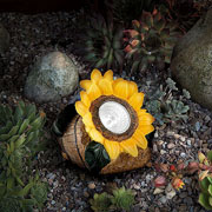 Solar Sunflower Spotlight