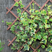 Tan Expanding Riveted Garden Trellis - 4 Sizes Available