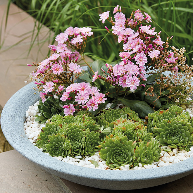 How to Create a Mini Alpine Garden