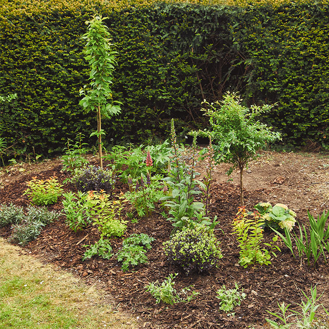 Design and Plant the Perfect Garden Border