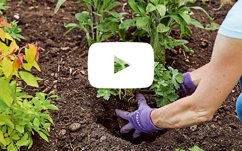 67e70d1f17d1a8 Design and plant a garden border