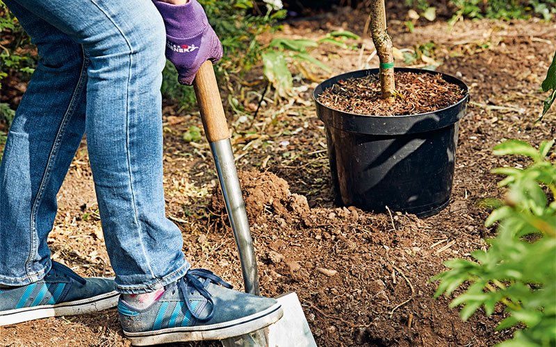 Dig holes for your plants