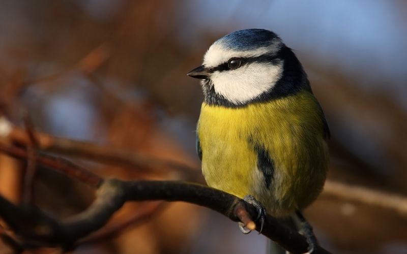 Caring for Garden Birds During the Winter