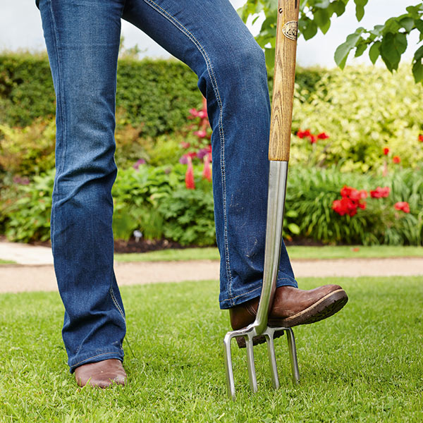 Aerate the lawn with a garden fork