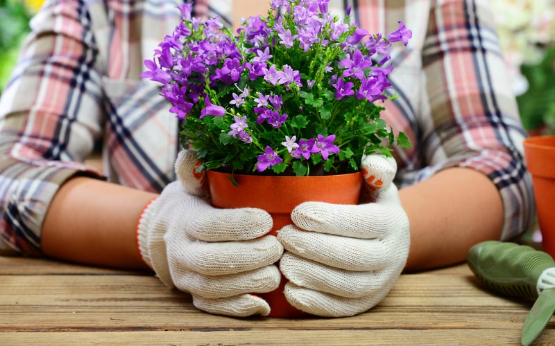 The Garden Department at Webbs offers garden advice and help