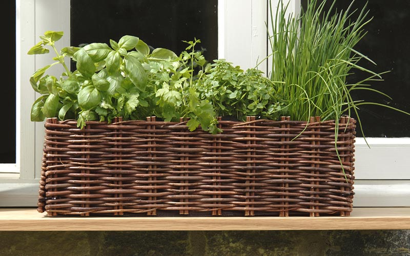 It's easy to grow herbs from seed with one visit to Webbs
