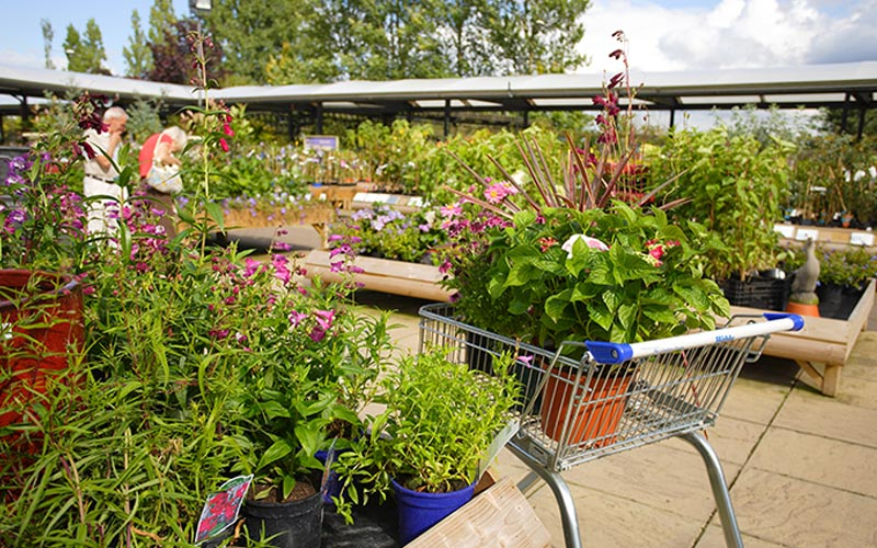 Outdoor Plants Shrubs Trees Department Webbs Wychbold