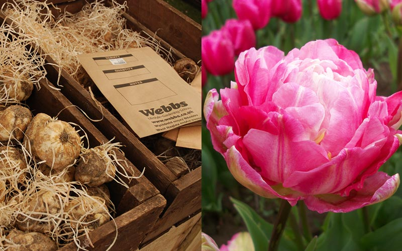 Visit Webbs for a fantastic range of seeds and bulbs