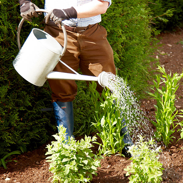 How To Water Your Garden in Summer