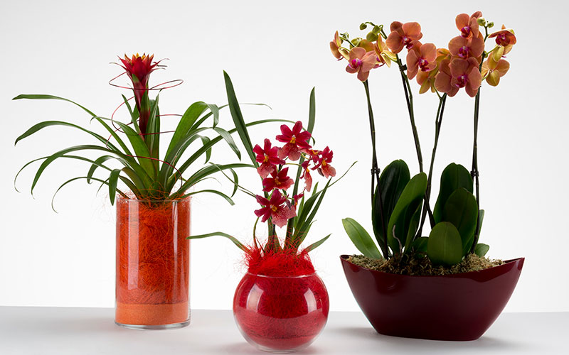 a versatile addition to any home house plants create colour but also boost the air quality in your home