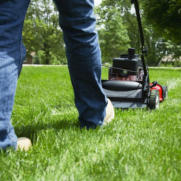 5 Spring Tips to Supercharge your Lawn