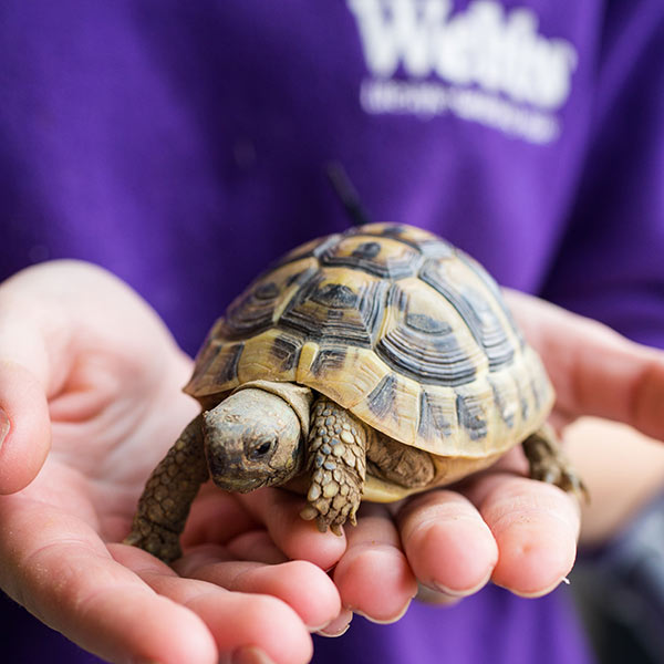 Meet Your Perfect Pet - Tortoise