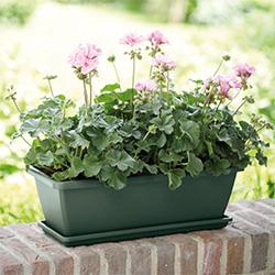 garden pots planters webbs direct garden centre - Garden Pots