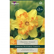 Narcissus 'Blazing Starlet' (5 Bulbs)