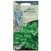 David Domoney Coriander Cilantro Seeds