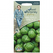David Domoney Brussels Sprout Brest F1 Seeds