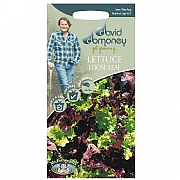 David Domoney Red & Green Loose Leaf Lettuce Seeds