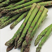 RHS Asparagus Connover's Colossal Seeds