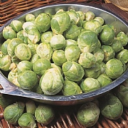 RHS Brussels Sprout Cascade F1 Seeds