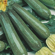 RHS Courgette Defender F1 Seeds
