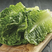 RHS Lettuce Cosmic Cos Seeds
