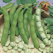 RHS Broad Bean Suprifin Seeds