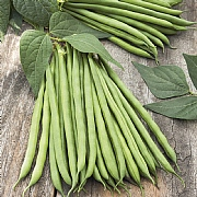 RHS Dwarf French Bean Safari Seeds
