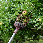 Kent & Stowe Telescopic Fruit Picker