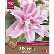 Lilium Roselily Isabella Oriental Double - 3 Bulbs