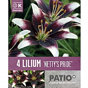 Lilium Netty's Pride - 4 Bulbs