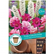 Pink Collection - 6 Bulbs