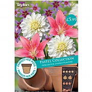 Pastel Collection - 10 Bulbs