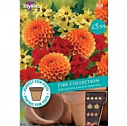 Fire Collection - 10 Bulbs