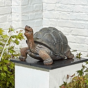 Kelkay Tortoise Water Ornament