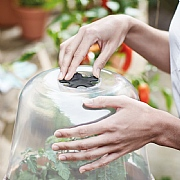 Elho Green Basics Grow House Round 30cm Transparent