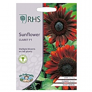 RHS Sunflower Claret F1 Seeds