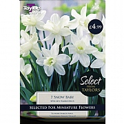 Narcissus Snow Baby (7 Bulbs)