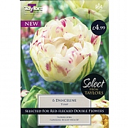 Tulip Danceline (6 Bulbs)