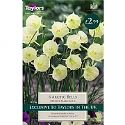 Narcissus Arctic Bells (6 Bulbs)