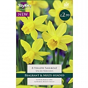 Narcissus Yellow Sailboat (8 Bulbs)