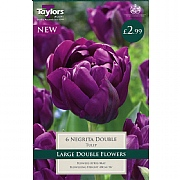 Tulip Negrita Double (6 Bulbs)