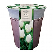 Tulip Calgary Indoor Ceramic Planter (3 Bulbs)