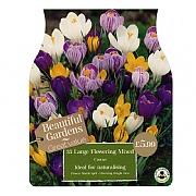 Crocus Large Flowered Mixed (35 Bulbs)