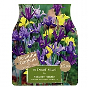 Iris Dwarf Mixed (40 Bulbs)