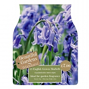 English Grown Bluebells (25 Bulbs)