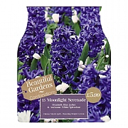Moonlight Serenade Combi Pack (15 Bulbs)