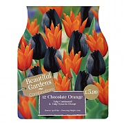Chocolate Orange Combi Pack (12 Bulbs)