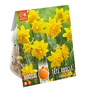 Narcissus Double Tete Boucle (10 Bulbs)